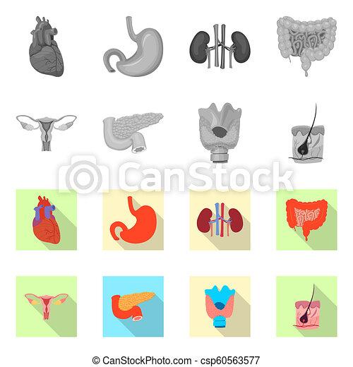 corporal, illustration., médico, símbolo., cobrança, vetorial, desenho, human, estoque - csp60563577