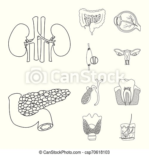corporal, jogo, sinal., web., exame médico ilustração, vetorial, human, símbolo, estoque - csp70618103