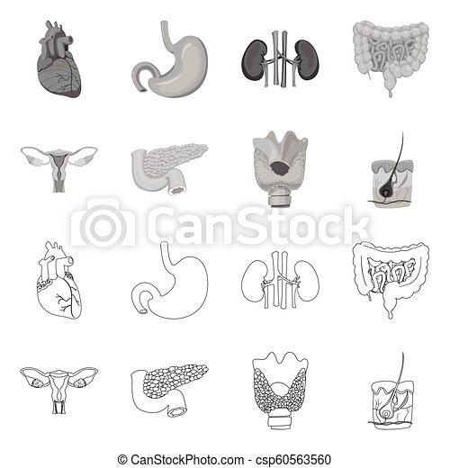 corporal, jogo, sinal., web., exame médico ilustração, vetorial, human, símbolo, estoque - csp60563560