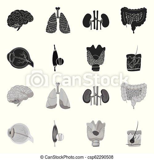 corporal, jogo, stock., médico, símbolo., ilustração, vetorial, human, ícone - csp62290508