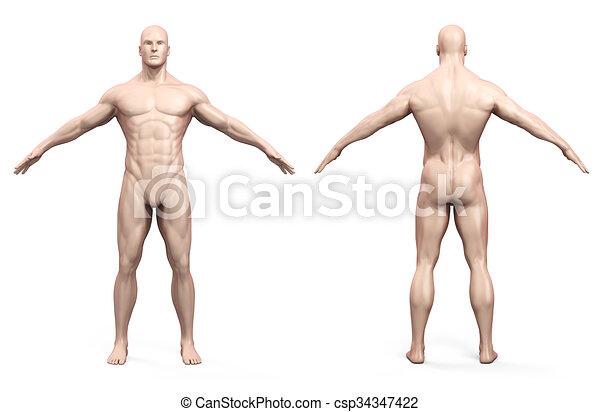 corps, humain, render, 3d - csp34347422