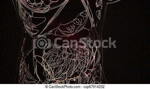 corps, visible, os, transparent, humain - csp67914232