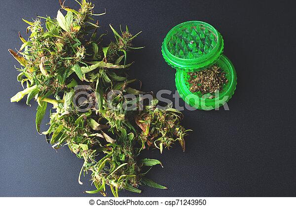 corte, moedor, marijuana, moer, cannabis, verde, fresco - csp71243950