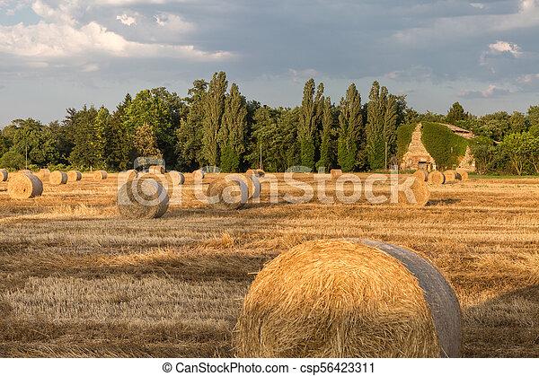 Hermoso paisaje campestre: fardos de heno dorados cosechados - csp56423311
