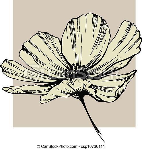 Cosmos flower - csp10736111