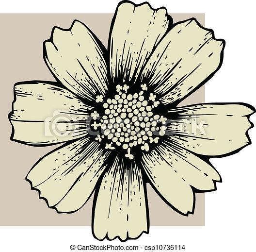 Cosmos flower - csp10736114