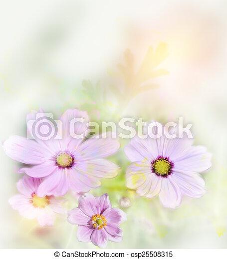 Cosmos Flowers - csp25508315