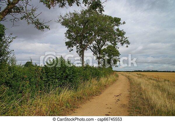 Cotswold camino en Inglaterra. Árboles y campos. - csp66745553