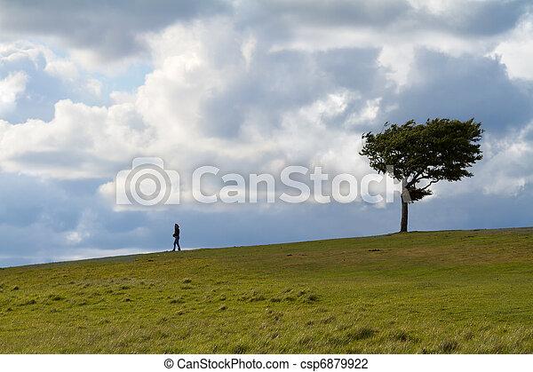 Árbol con andador en la colina del arroyo en un día de viento, cotswolds, Inglaterra - csp6879922