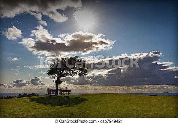 Árbol con sol en Cleeve Hill en un día ventoso, cotswolds, Inglaterra - csp7949421