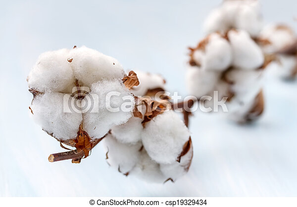 Cotton buds branch. Small Depth of Field (DOF) - csp19329434