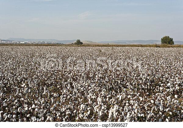 cotton farm - csp13999527