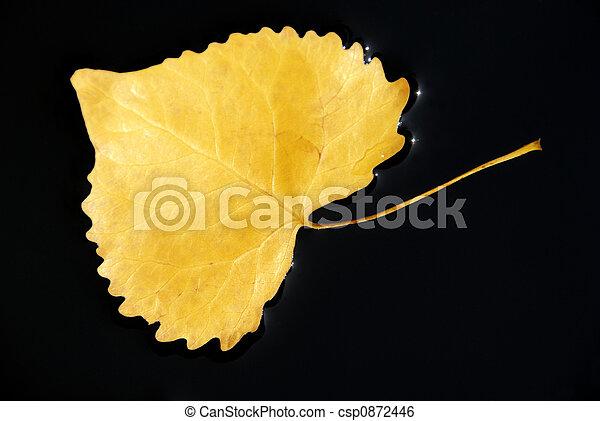 Cottonwood Leaf in Water - csp0872446