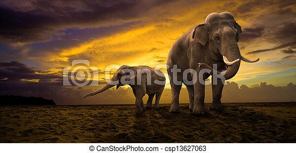 coucher soleil, famille, éléphants - csp13627063