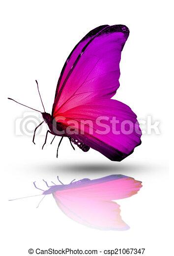 Couleur blanc isol fond papillon - Papillon dessin couleur ...