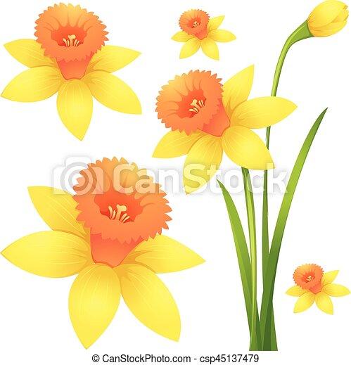 couleur jonquille fleur jaune csp45137479 - Fleur Jonquille