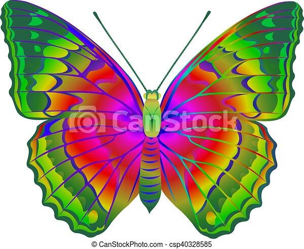 Couleur papillon entiers illustration de stock - Papillon dessin couleur ...