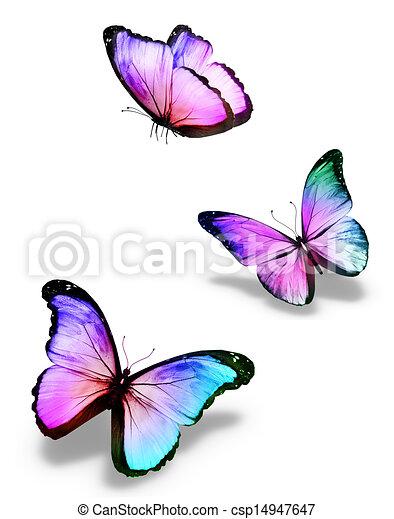 Dessin Papillon En Couleur couleur, papillons, trois. couleur, blanc, papillons, trois, isolé.