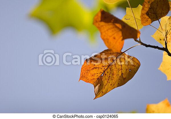 couleurs, automne - csp0124065