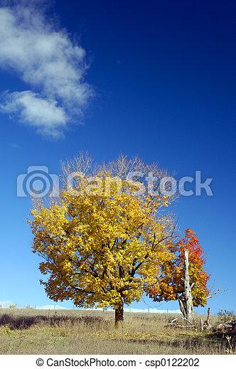 couleurs, automne - csp0122202