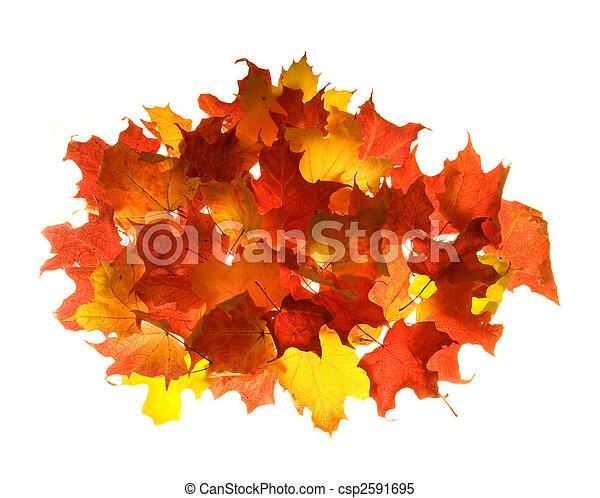 couleurs, feuille, ardent, érable, automne - csp2591695