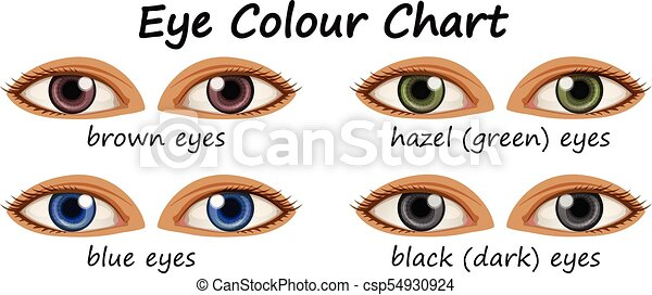 couleurs, yeux, humain, différent - csp54930924
