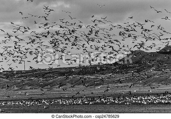 Countless Seagulls - csp24785629