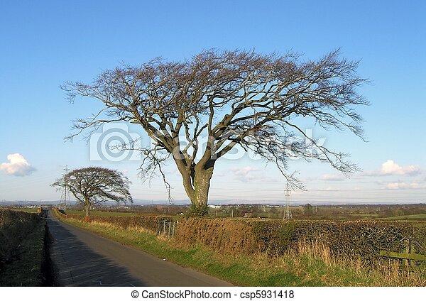 Country Lane 3 - csp5931418