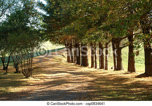 Country Lane in Fall - csp0834641