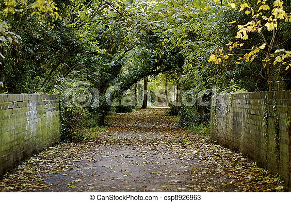 Country Lane In Fall - csp8926963