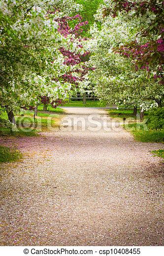 Country Lane - csp10408455