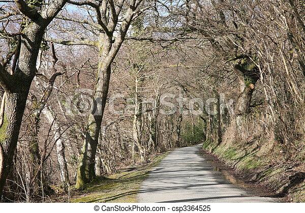 Country lane. - csp3364525