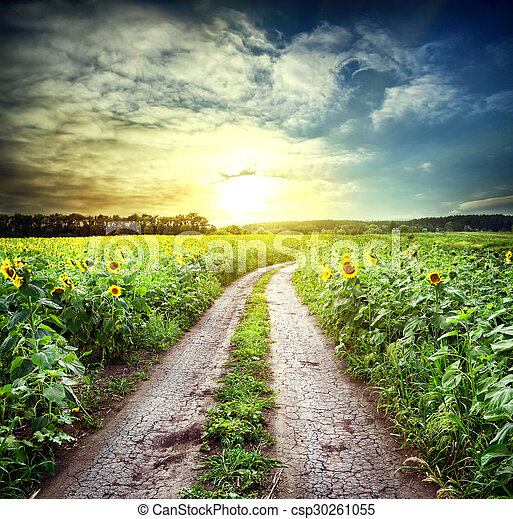 Country road among sunflowers - csp30261055