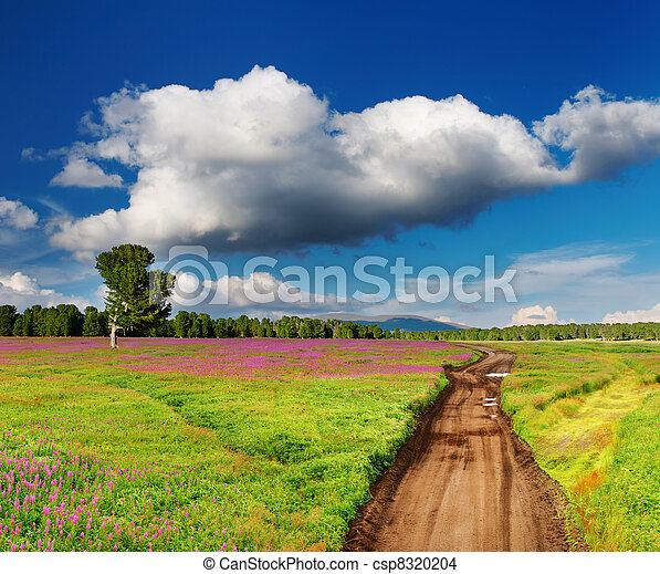 Country road in blossoming field - csp8320204