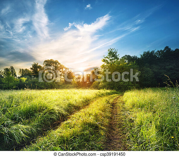 Country road in the high thick grass - csp39191450