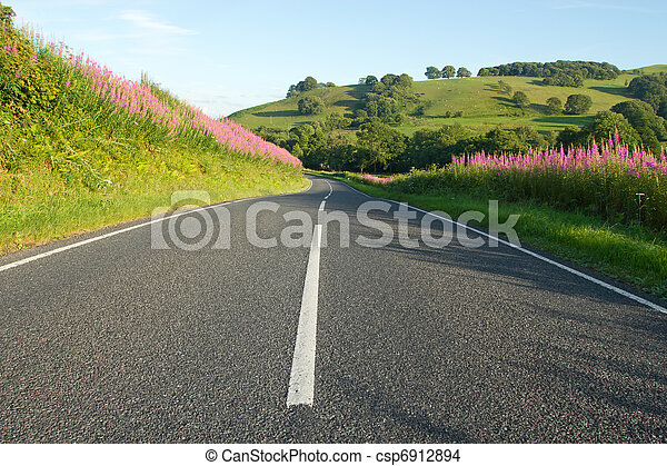 Country road in Wales with rosebay willowherb verges. - csp6912894