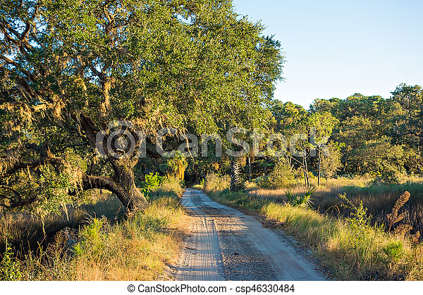 Country Road Lined with Oak trees - csp46330484