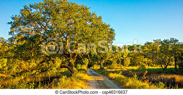 Country Road Lined with Oak trees - csp46316637