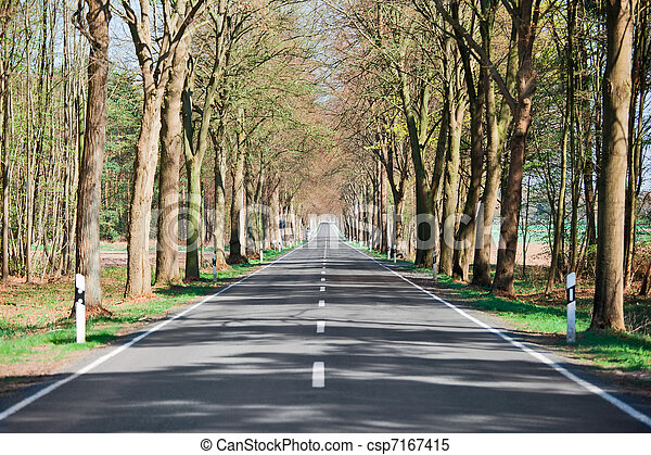 Country road lined with trees - csp7167415