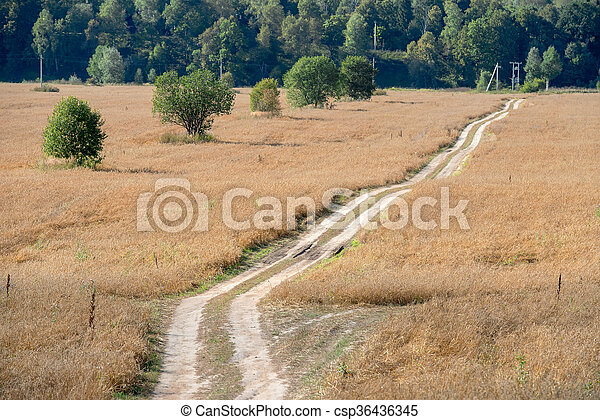 Country road - track through the wheat fields - csp36436345