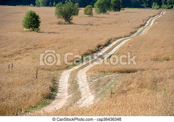 Country road - track through the wheat fields - csp36436348