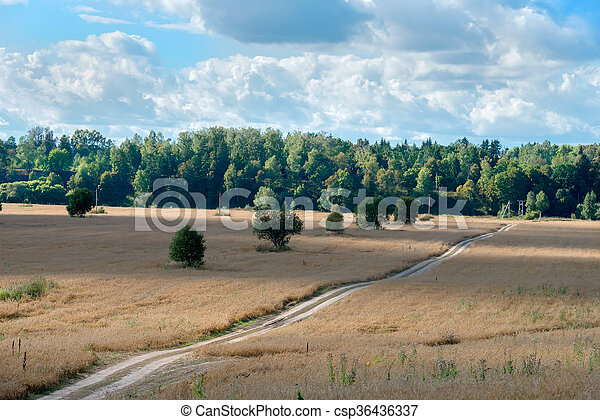 Country road - track through the wheat fields - csp36436337