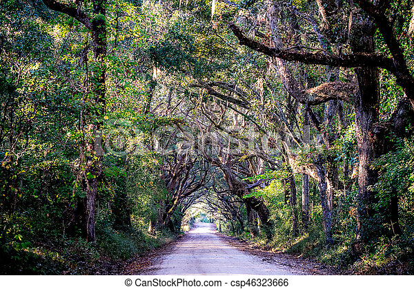 country road with oak trees at plantation - csp46323666