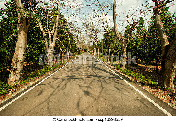 Country road with trees along - csp16293559