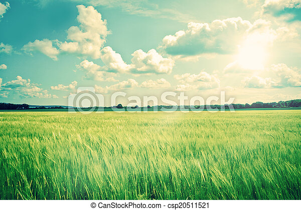 Countryside landscape with crops and sunshine - csp20511521