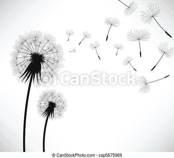 coup, fleur, vent, pissenlit - csp5675969