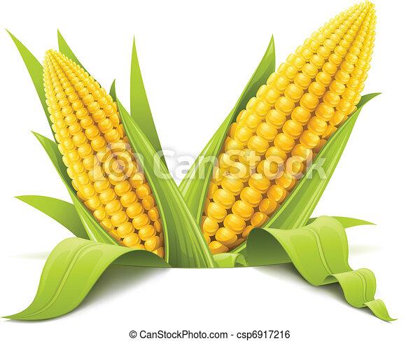 couple corncob - csp6917216