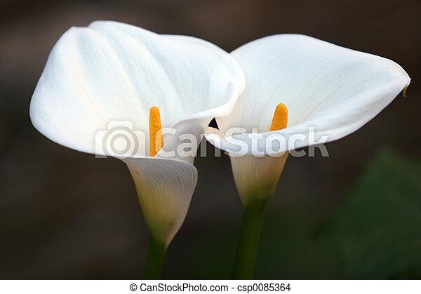 couple, fleur - csp0085364