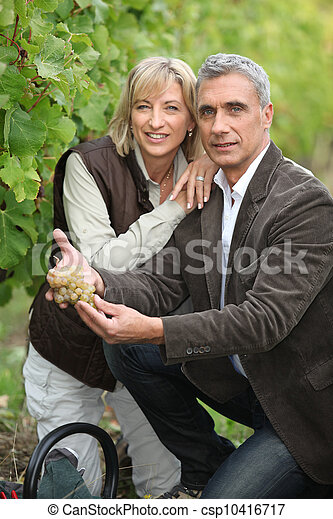 Couple gathering grapes - csp10416717