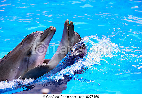 Couple of dolphin in blue water. - csp10275166